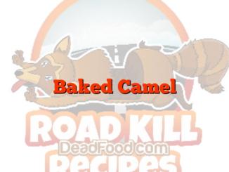 Baked Camel