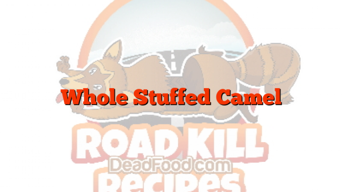 Whole Stuffed Camel